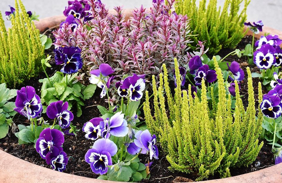 Ogarnij swój ogródek po zimie