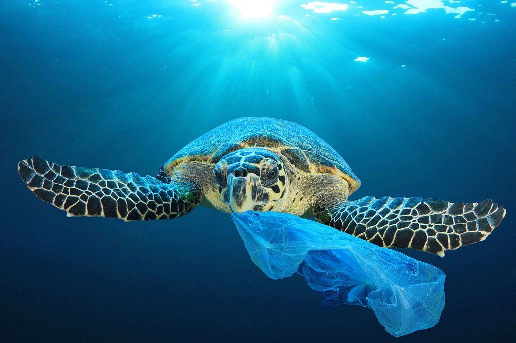 Żółw zjadający plastik