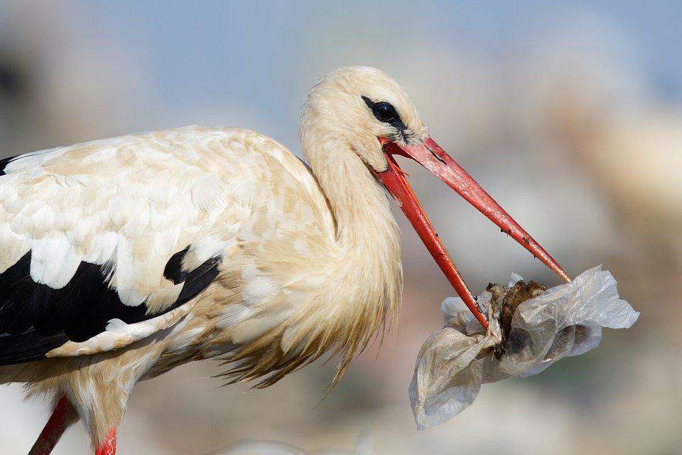 Plastik jest bardzo niebezpieczny dla zwierząt