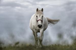 Ssawka-dla-koni-do-odkurzacza