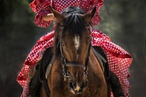 Skuteczna-ssawka-do-odkurzacza-dla-koni